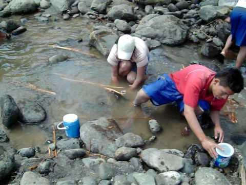 Pesca artesanal con tapada en el río Jiboa Parte 2.