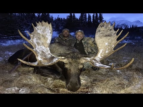 Xxx Mp4 The Moose Hunt Awesome Hunting Adventure In British Columbia 3gp Sex