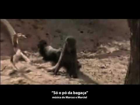 Animais bebados de Amarula
