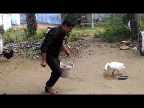 batakh ki jaan baalti mai   Funny Video   New on Youtube