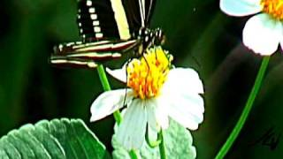 butterly - the video