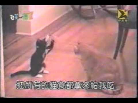 Xxx Mp4 Funny Videos Catfight Fight Xxx Pussy Cat 3gp Sex
