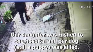 Hit-and-run injures girl, kills dog — Heartbreaking moment on video