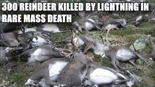 300 REINDEER KILLLED BY LIGHTNING IN RARE MASS DEATH