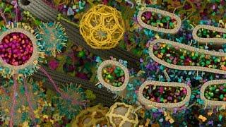 A Vida Interior da Célula [The Inner Life of the Cell] [HD]