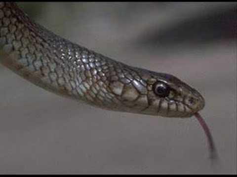 yılanın peygamber efendimize olan aski s.a.v FERHAT AYDIN
