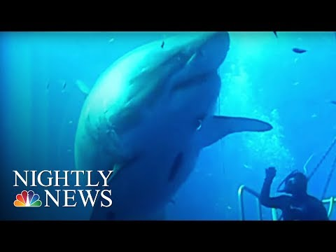 Say Hello to Deep Blue: 'The Biggest Shark Ever Filmed' | NBC Nightly News