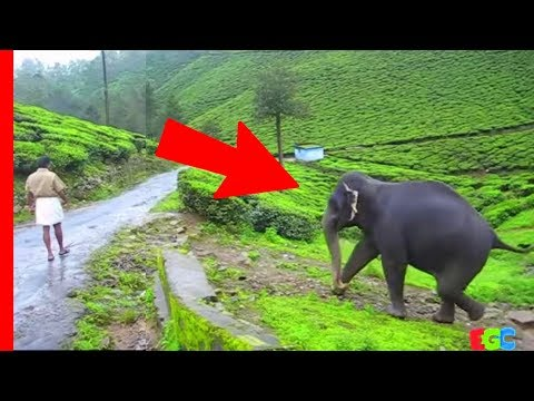 Pet Elephant meets her friend after a year ★ AMAZING Bond of Love