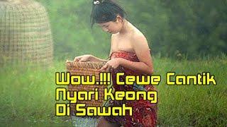 Woww.!!! Cewek Cantik Basah-basahan Di Sawah Nyari Keong