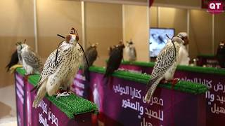 The opening day of the first edition of the Katara International Hunting and Falcons Exhibition