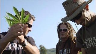 Criminels 2.0 - Arjan Roskam, le roi du cannabis