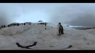 Fluffy penguin chicks in 360