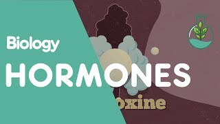 What are hormones | Biology for All | FuseSchool
