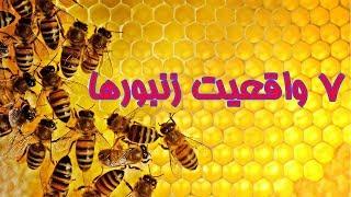هفت نکته از زندگی زنبورها که شاید ندانید