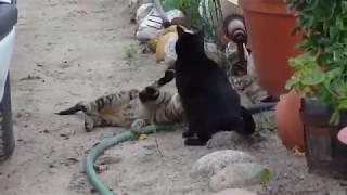 Gatas Brincando Nuas Na Rua - Cats Playing Naked On The Street