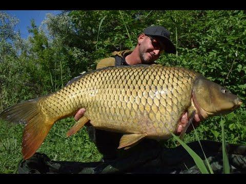 FEEDERMANIA Vadvízi horgászat