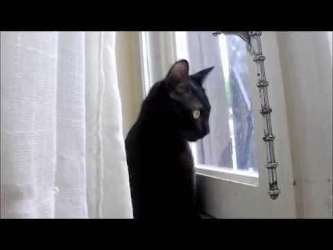 Xxx Mp4 Chat Qui Miaule Miaule Et Miaule Cat Meowing 3gp Sex