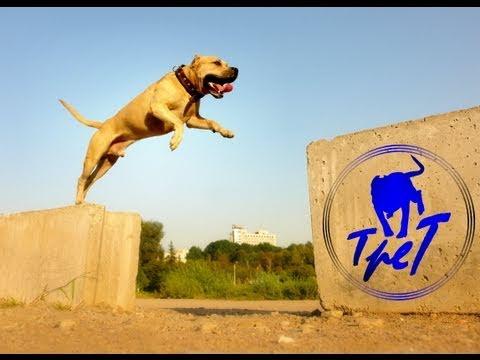 TreT Style parkour dog from Ukraine