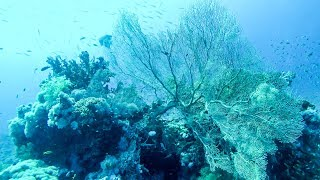 Marine Life on the Coral Reef. Scuba Diving in the Red Sea
