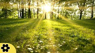 Healing Meditation Music, Relaxing Music, Music for Stress Relief, Background Music, ✿3181C