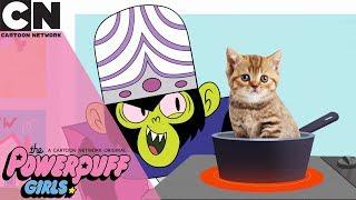 The Powerpuff Girls | Fake News | Cartoon Network