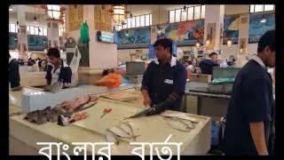 Kuwait Fish Market HD কুয়েতে মাছ বাজার