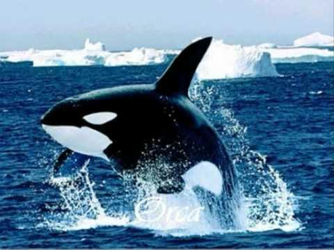 Animais do Ártico e da Antártida.