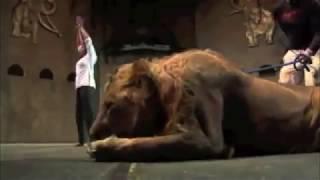 طرائـف وعجائب الحيوان مع الانسان -16 Beast Supercut Compilation