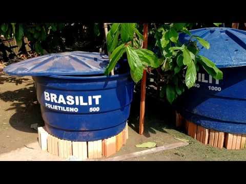 Criação de peixe Tambaqui em caixas de água de 500 e 1000 litros.