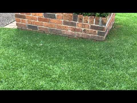 [Kikuyu Lawn Care] [Lawn Greener] [Lawn Aerator] [What Grass Is That] [Love My Lawn]