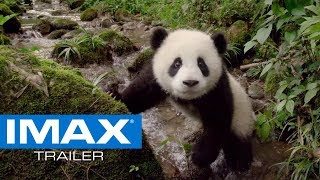 Pandas IMAX® Trailer #2