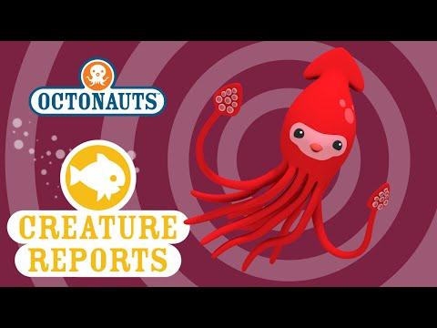 Octonauts Creature Report Giant Squid