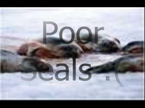 Seal Rape Awareness