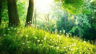 Healing Meditation Music, Relaxing Music, Calming Music, Stress Relief Music, Peaceful Music, ☯3243