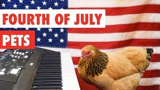 Fourth of July Pets   Funny Pet Video Compilation 2017