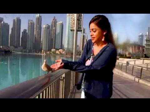 Dubai Diaries 10 things that only happen here