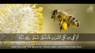 « وأوحى ربك إلى النحل » سبحان من خلق فأبدع .. تلاوة خاشعة من سورة النحل