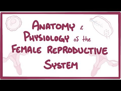 Xxx Mp4 Anatomy And Physiology Of The Female Reproductive System 3gp Sex