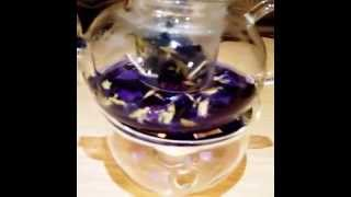 Clitoria Ternatea Butterfly Pea Blue Flower Tea Malaysia Johor