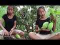 Download Video Download Survival skills: Find & meet natural mango for food - Green mango eating delicious #21 3GP MP4 FLV