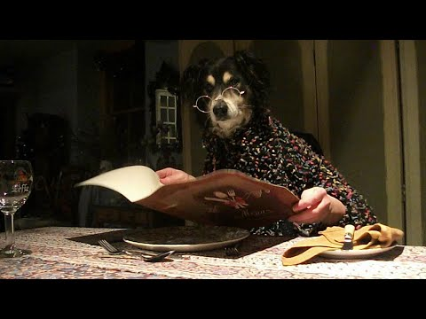 Dinner for Two - (dogs dining)