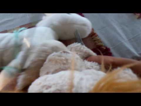 Xxx Mp4 Horrsy S Bad Dream Part 3 Winner Winner Horrse For Dinner 3gp Sex