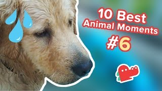 10 Best Animal Moments of the Day #6