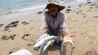 Vì sao cá chết hàng loạt ở miền Trung?