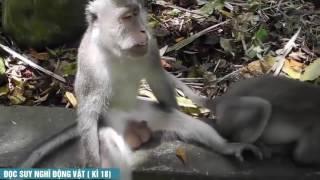 ●Funnytroll●Đọc suy nghĩ động vật Tổng Hợp   Tin Việt MC Trung Tô phần  6