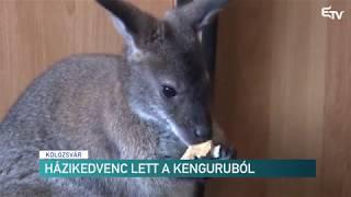 Házikedvenc lett a kenguruból – Erdélyi Magyar Televízió