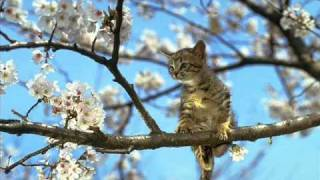 Zdjęcia Kotów : D