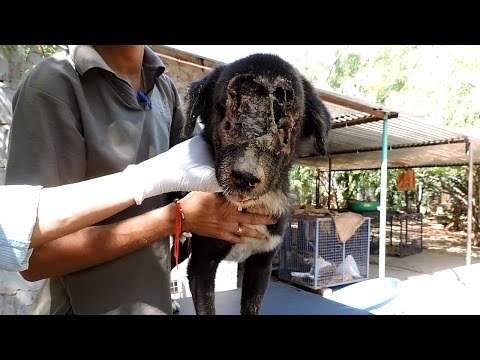 The dog who grew a new face – Kalu's astounding recovery (graphic)