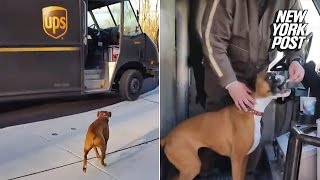 This boxer actually runs to the deliveryman out of joy