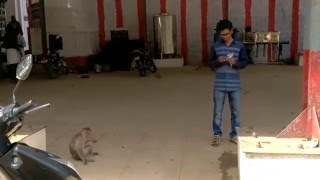 Whats App Latest Funny Videos 2016 || Avinash Play With Monkey .......